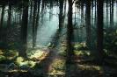 De Ardennen in de herfst
